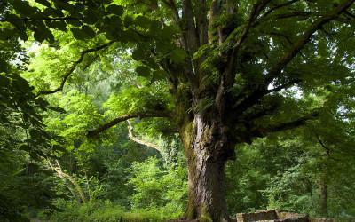 Les hommes passent, l'arbre demeure