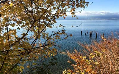 Méditation du lac: contemplation musicale