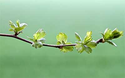 Le printemps, par tous les temps